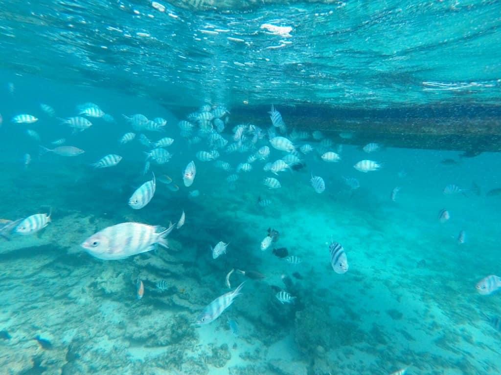 Blue Bay Snorkeling