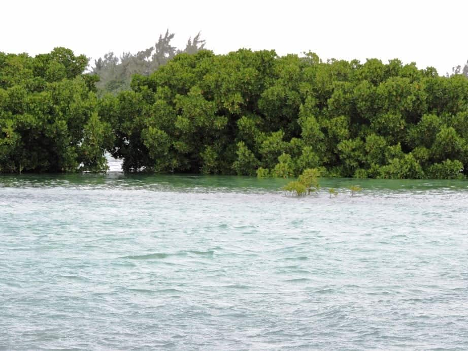 Bras d'Eau Mangroves