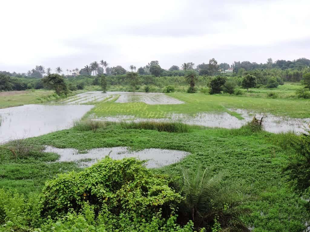 Flooded fields around Muthanallur lake