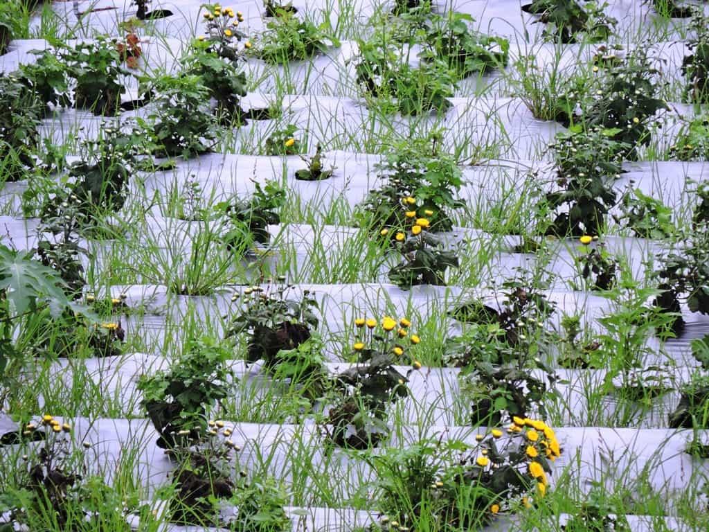 Flower farms around Bangalore