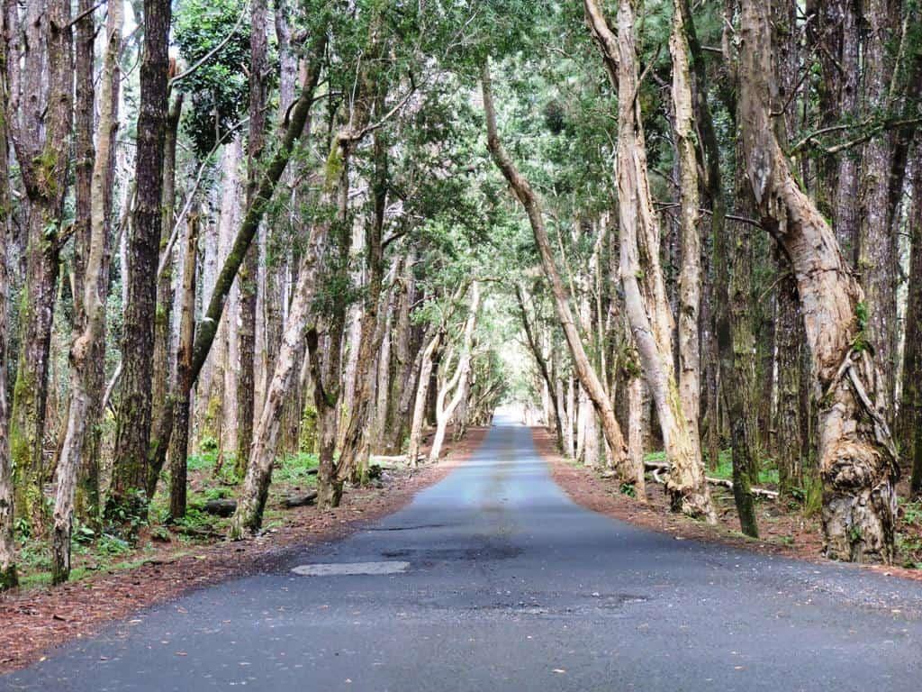 Papyrus forest near Alexandra Falls