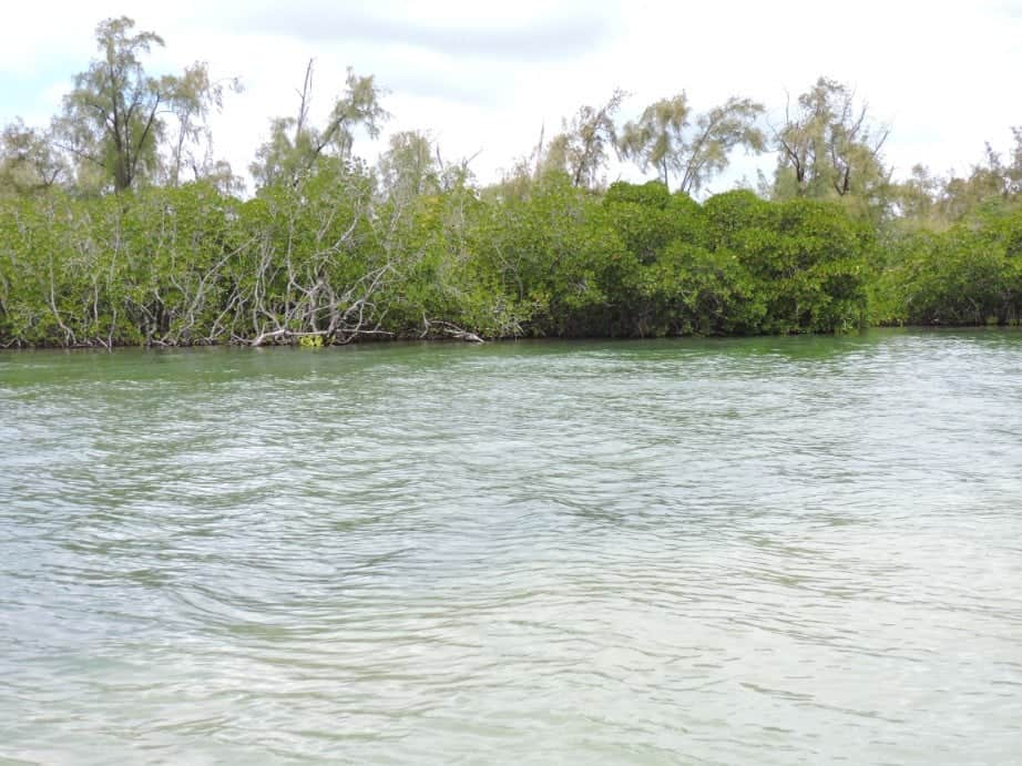 salt water lagoons and mangroves near Ile Aux Cerfs