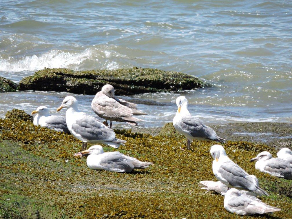 Birds near second beach
