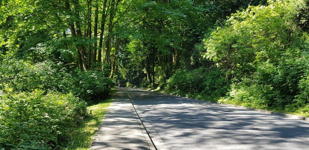 Road inside Stanley Park