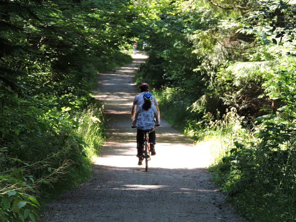 Walking cum cycling trail in Stanley park