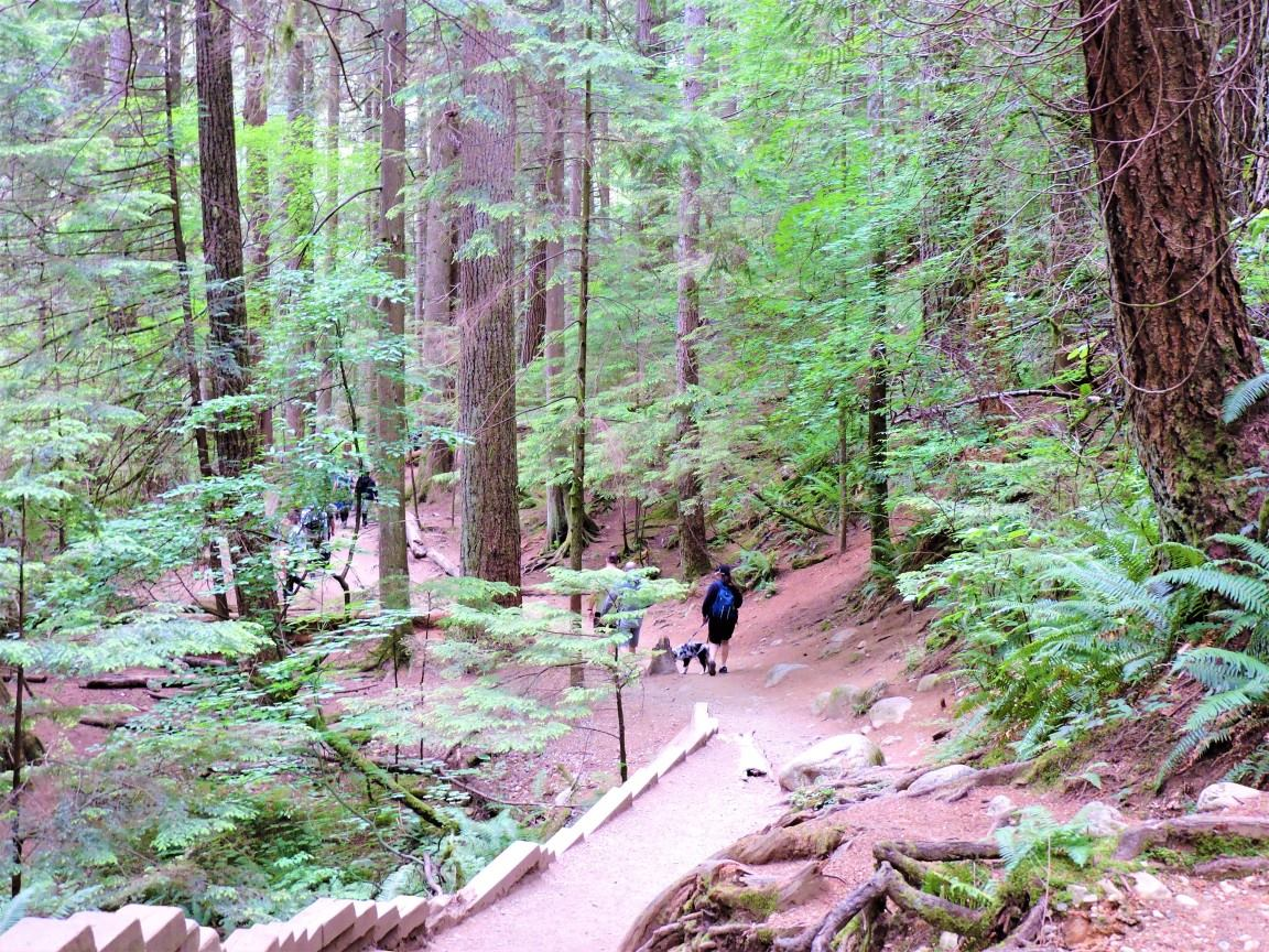 lynn valley trail