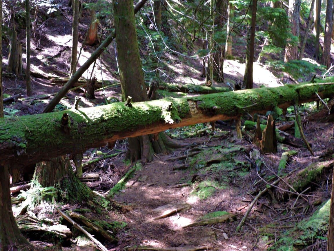 Tree fallen on trail before Eagle bluffs