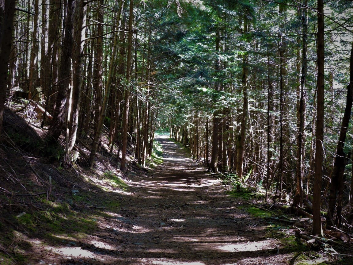 Wide trail after Whyte Lake
