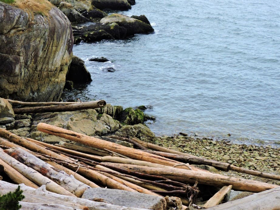 Wooden logs at one of the light house beach