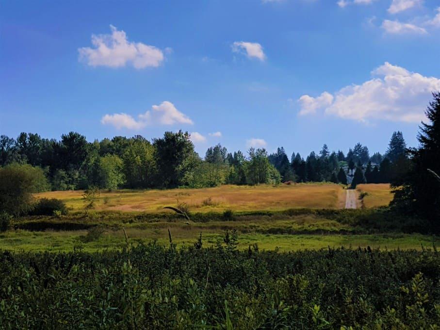 Deer Lake Park Wetlands