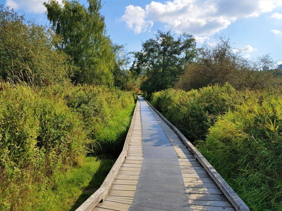 Deer Lake Park Woodenboard