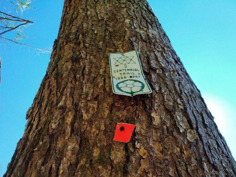 Centenniel trail mark on Sumas Mountain trail