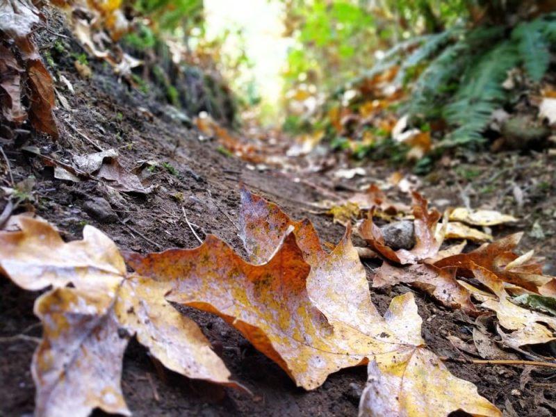 Sumas Mountain trail in Autumn