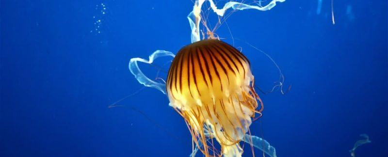 Vancouver Aquarium (10)