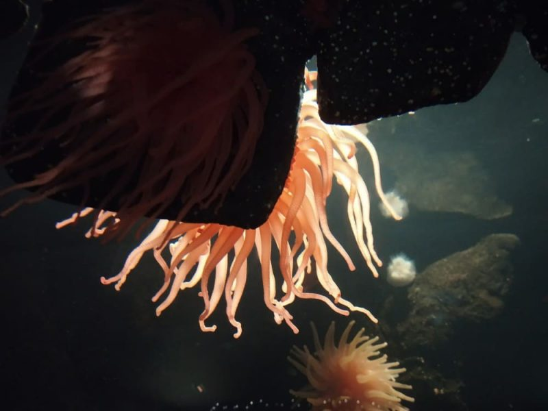 Vancouver Aquarium (7)