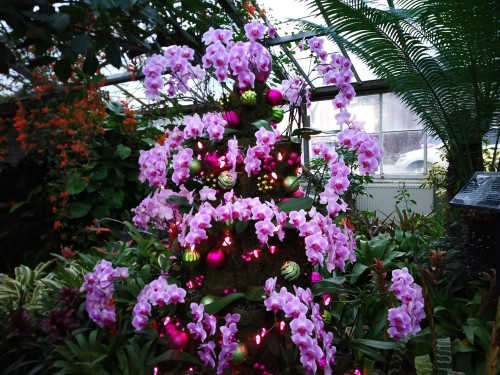 Allan Gardens Toronto Winter Flower Show (3)