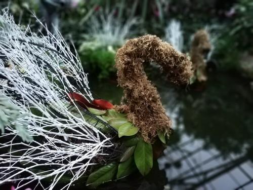 Allan Gardens Toronto Winter Flower Show (4)