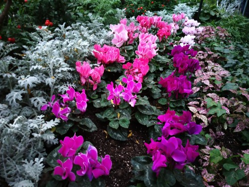 Allan Gardens Toronto Winter Flower Show (8)