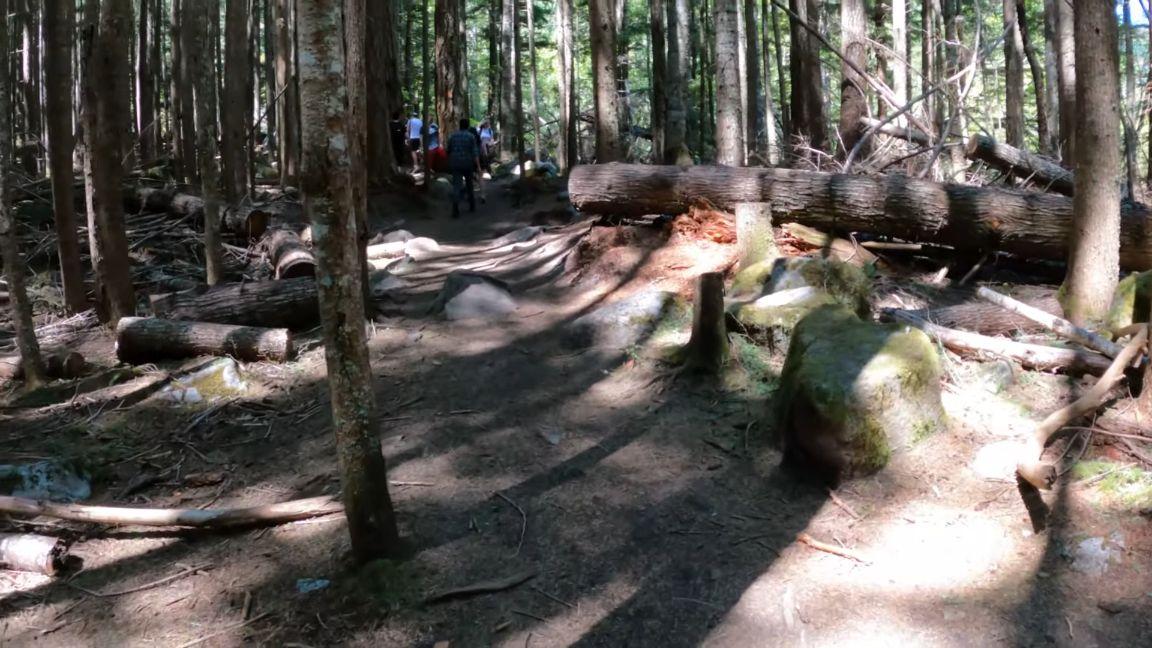 Flat-trail-near-the-lake