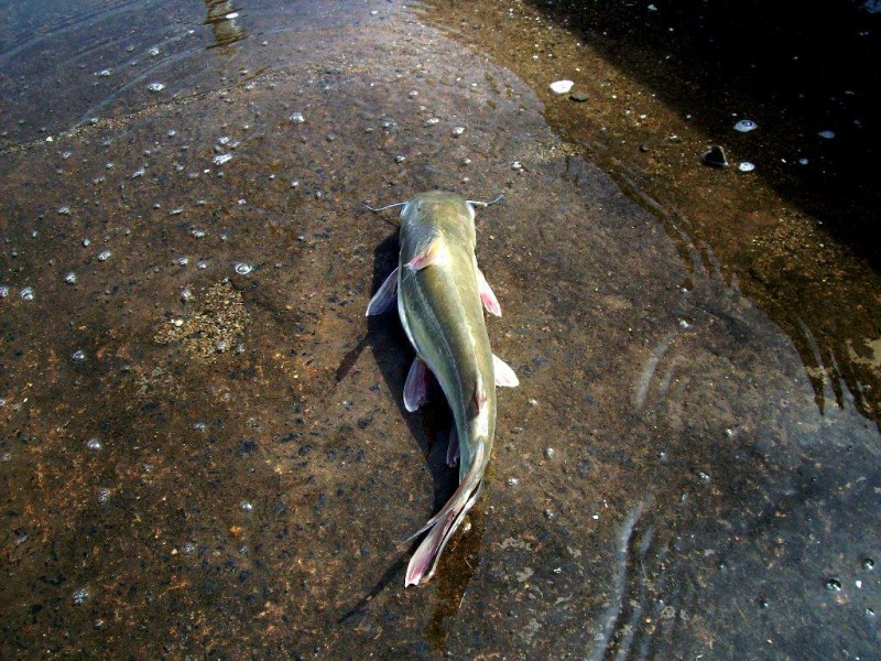 A fish at Pondicherry Harbour dock