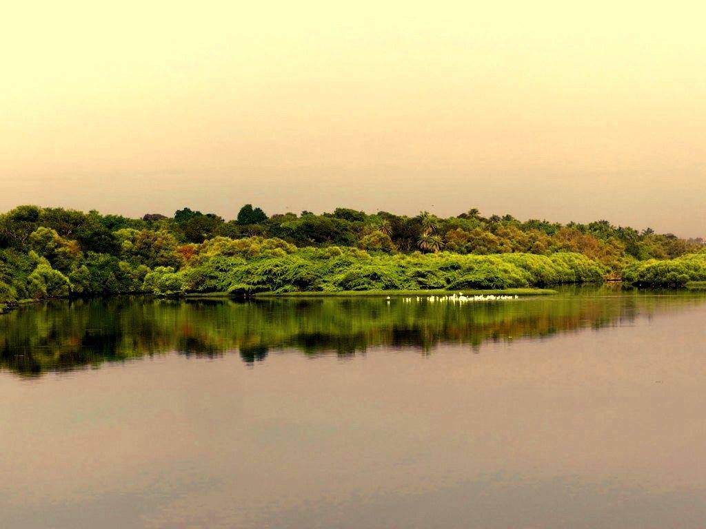 Adyar Estuary at evening