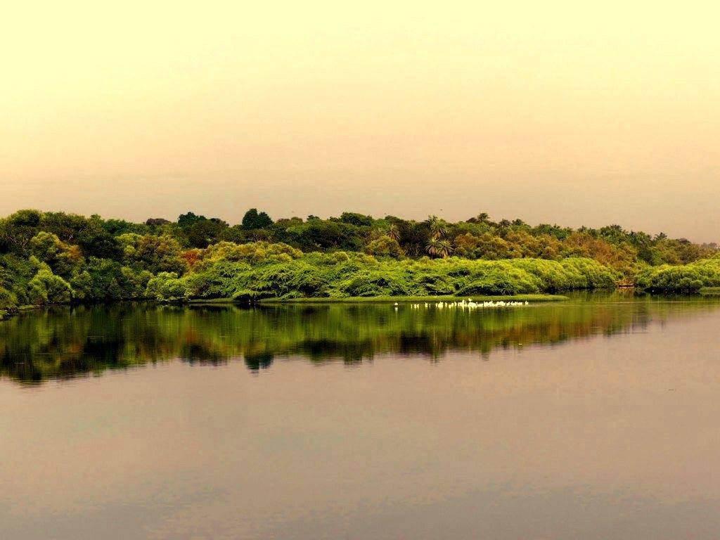 Adyar Estuary at evening