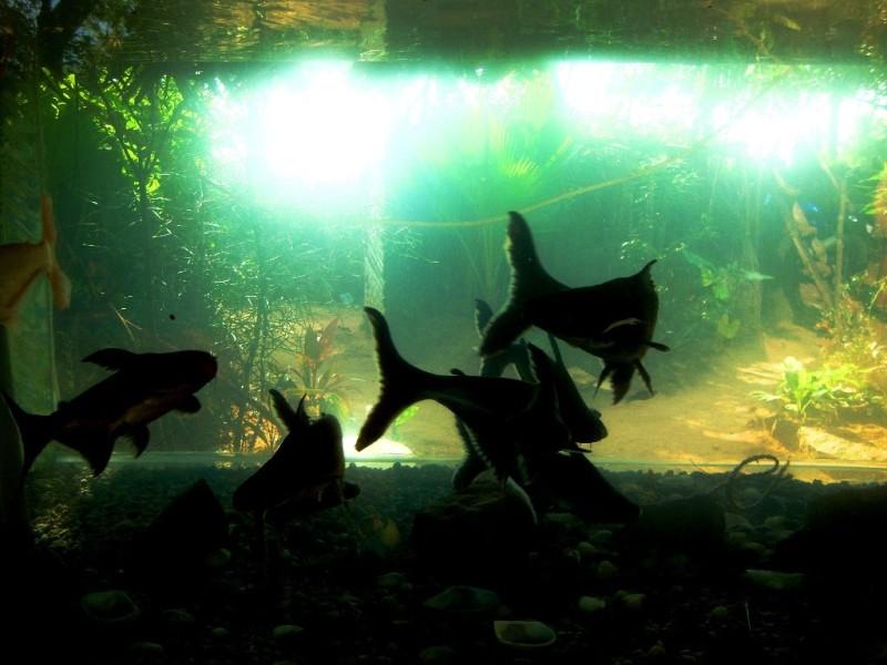 Aquarium at the cottage