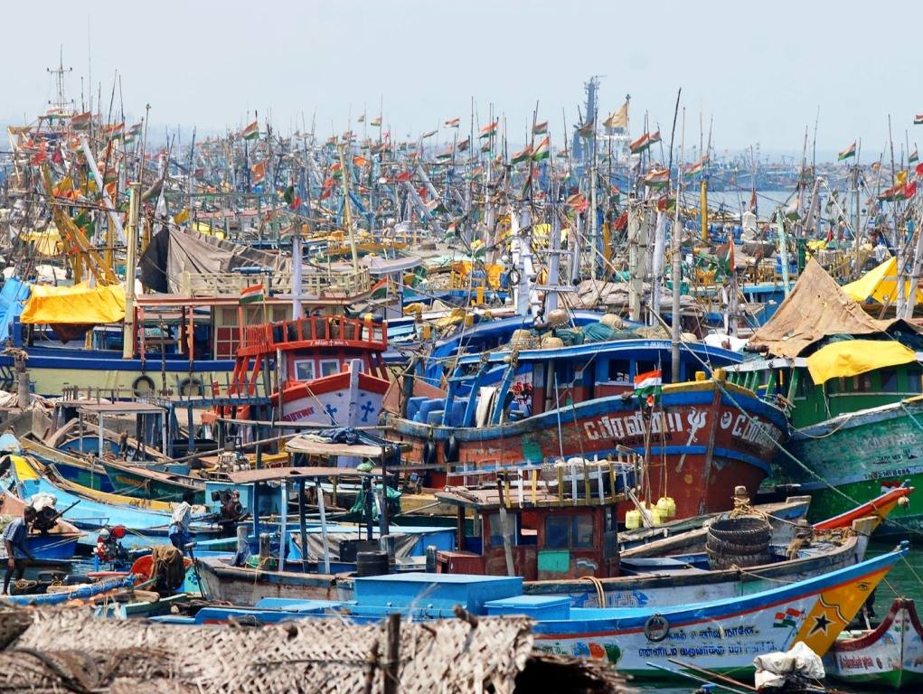Chennai Fishing harbour