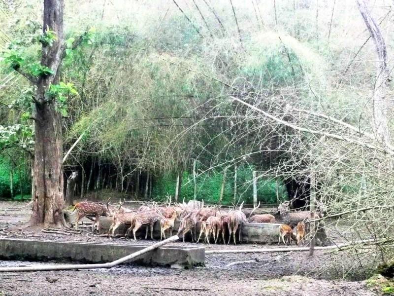 Deer park at Nisargadhama