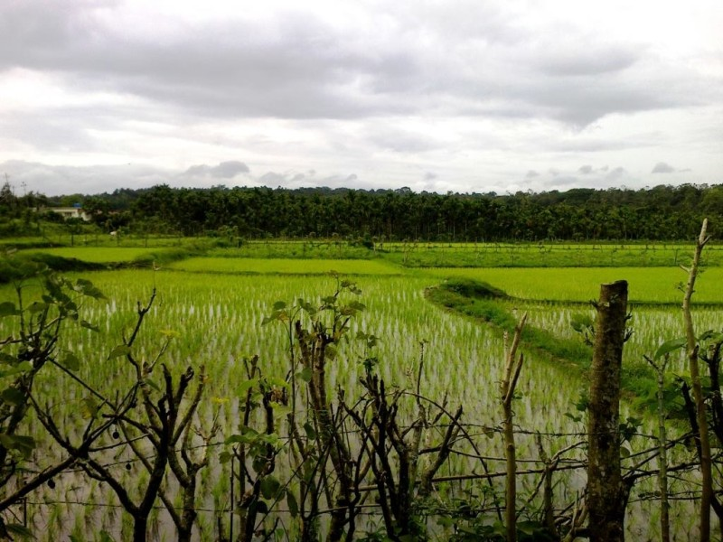 Paddy fields on the way to DUbare forest