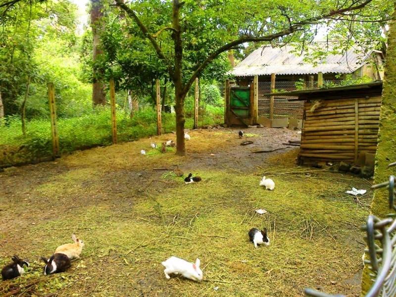 Rabbit park at Nisargadhama